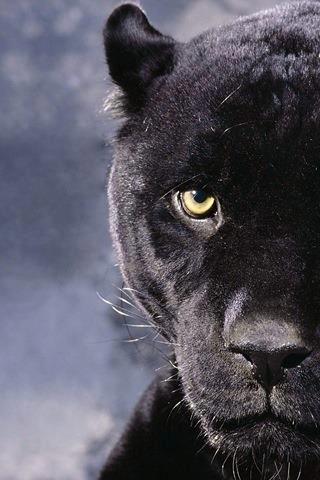 cat black scary
